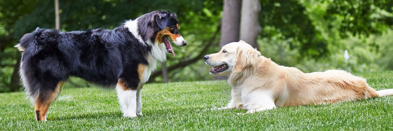Outdoor Hidden Dog Fences Dogwatch Of Central Oregon
